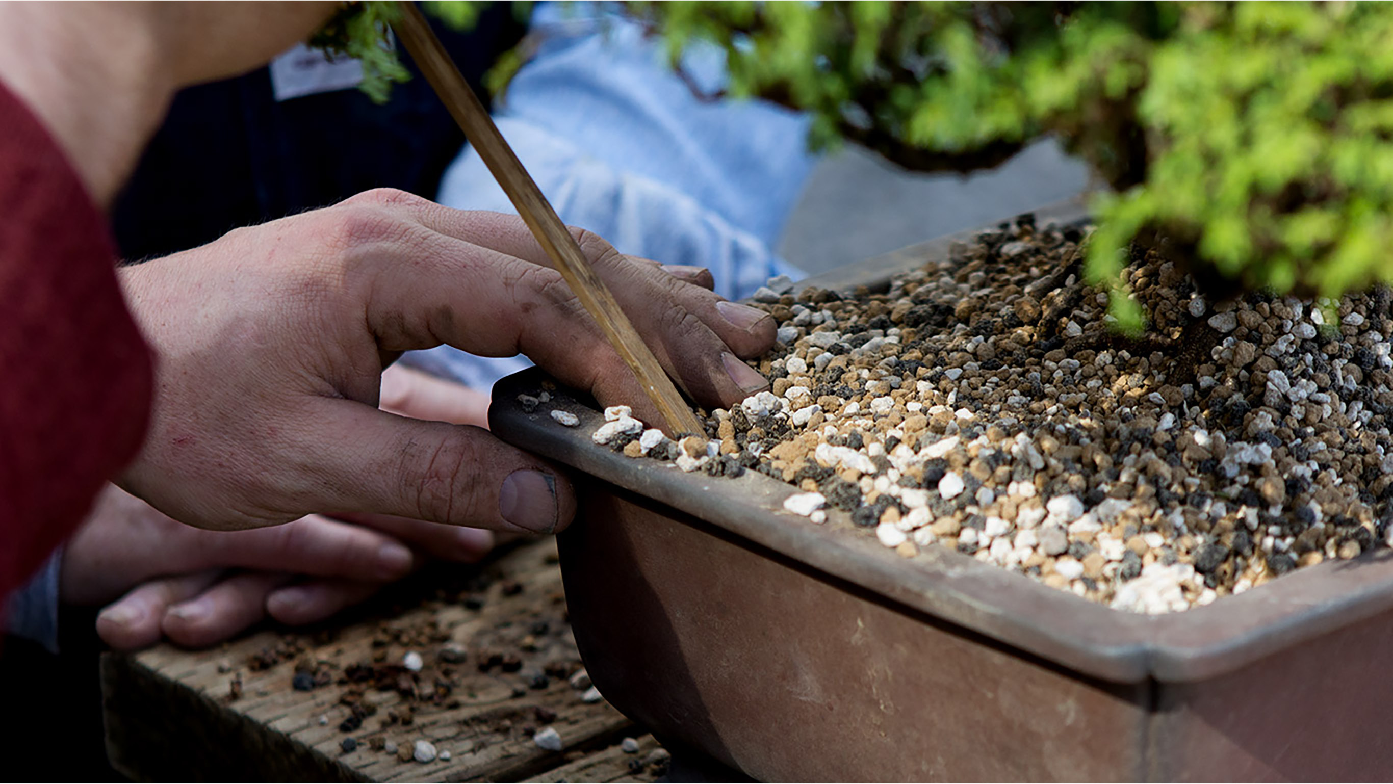 A photo of a chopstick being used to place soil in a bonsai container.