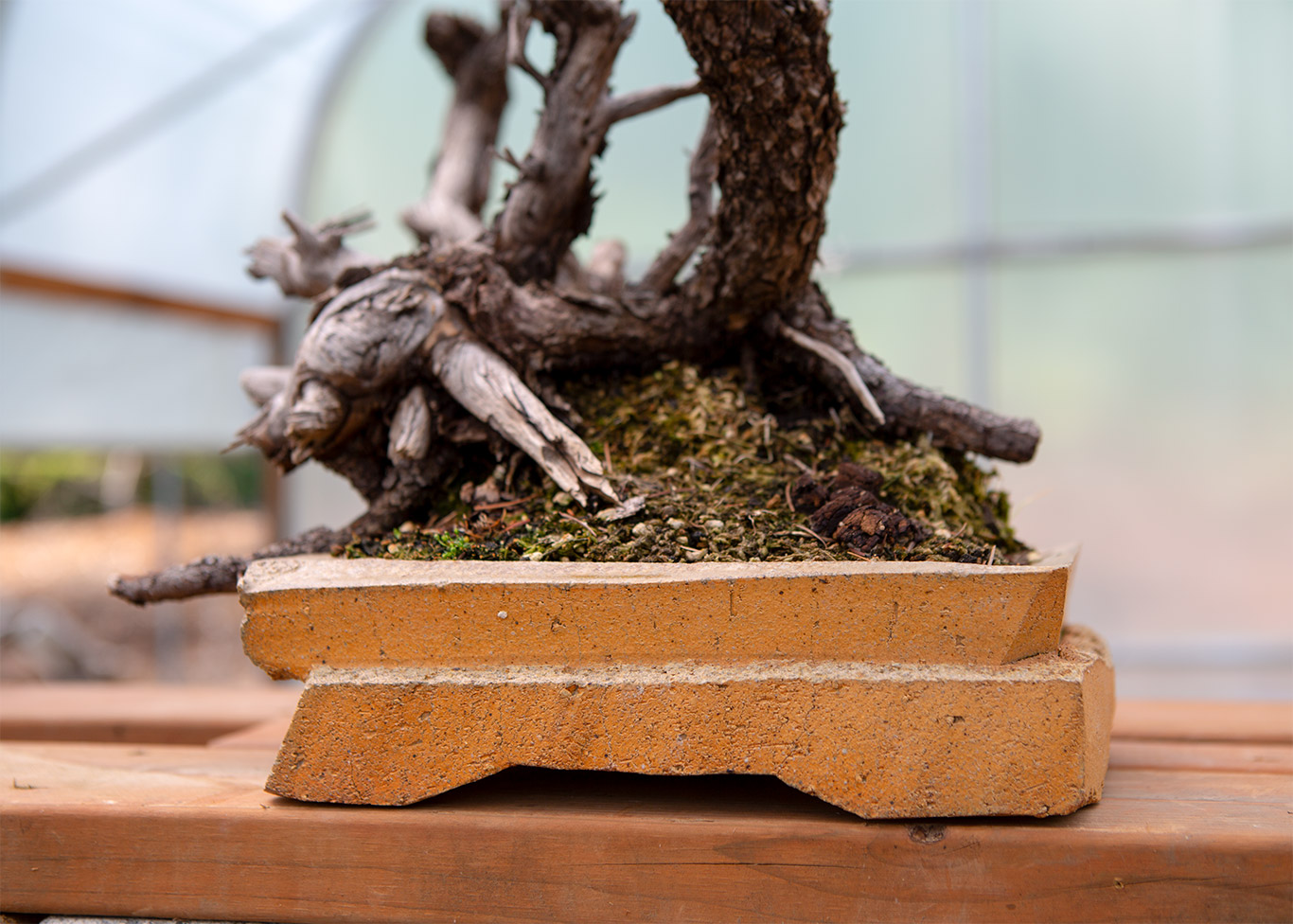 The Force Of Form Bonsai Mirai