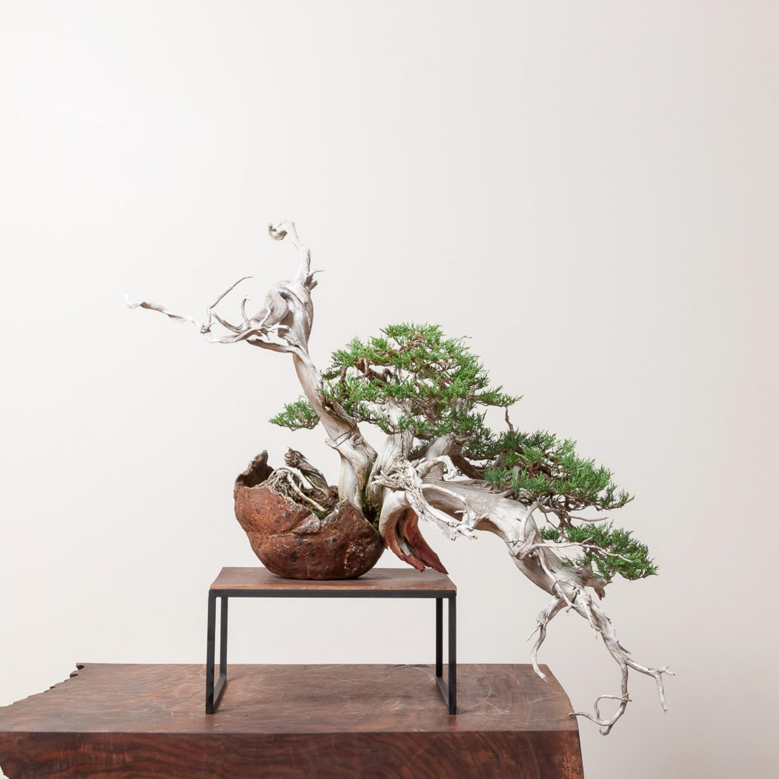 RMJ_bonsai
