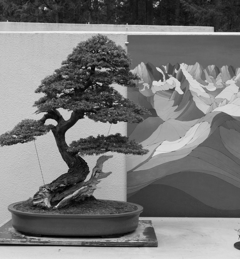 bonsai_cascades_natives