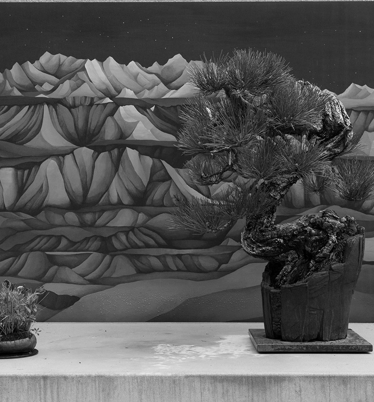 badlands_bonsai_ponderosa_pine