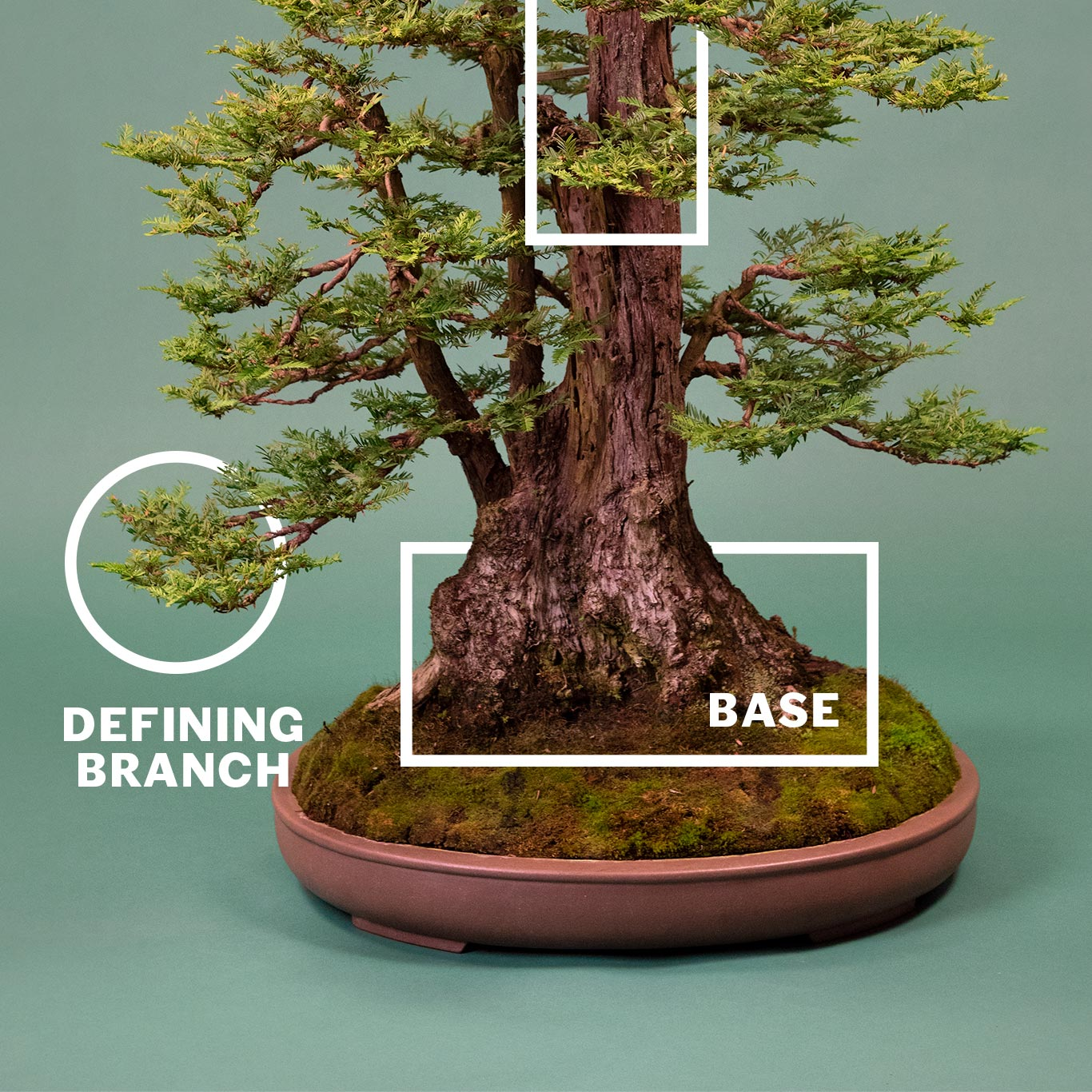 bonsai_anatomy_2