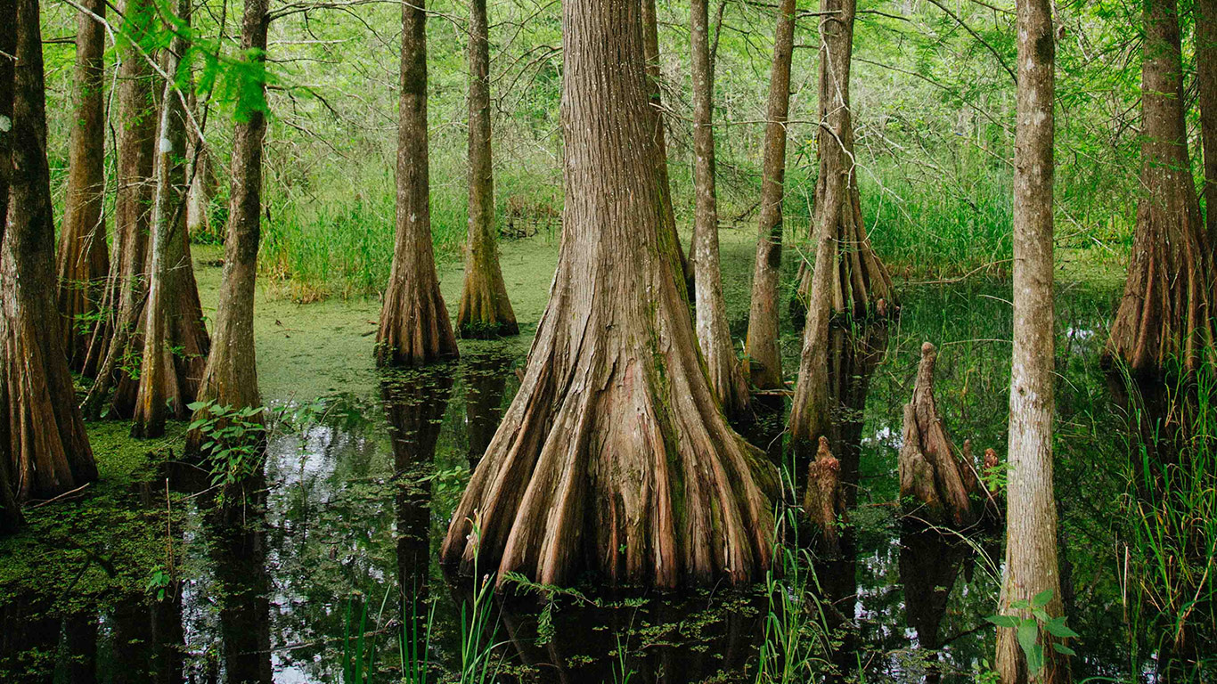 florida_environment_swamp_cypress_kyle_glenn