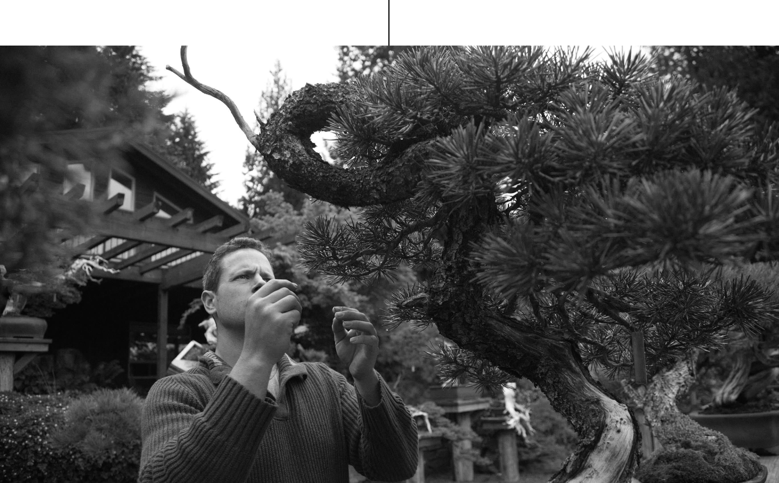 Ryan_neil_bonsai_professional_mirai