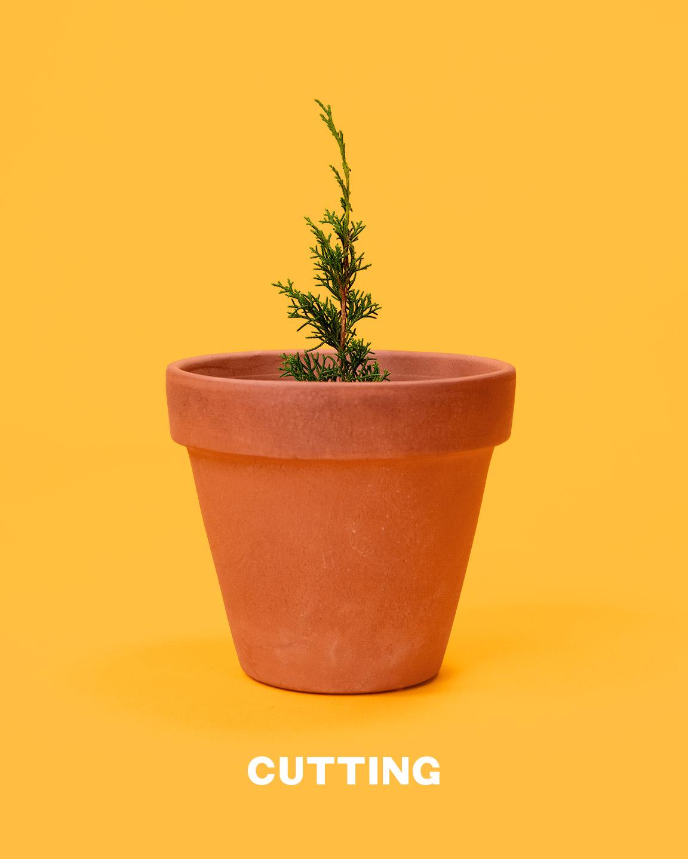 bonsai_cutting_mirai
