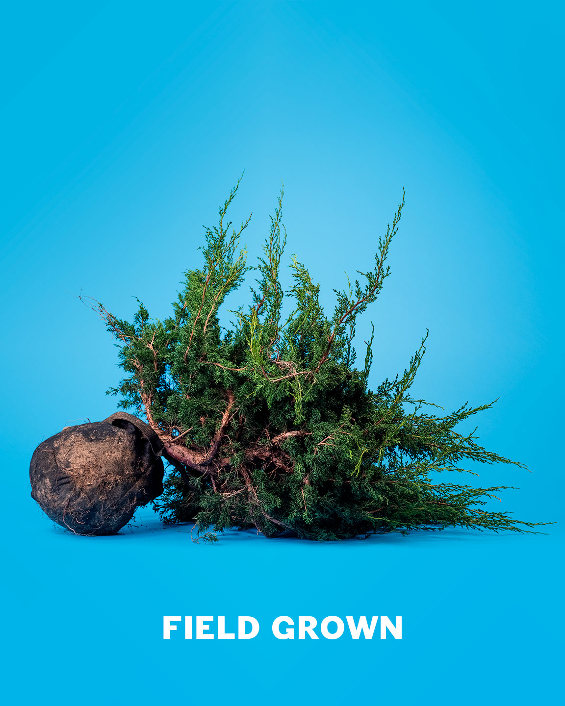 field_grown_bonsai_material