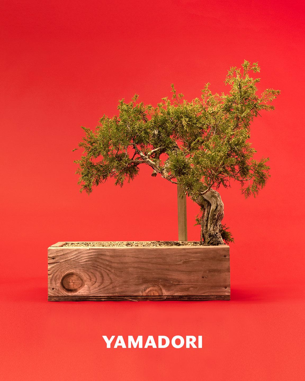 yamadori_juniper_bonsai