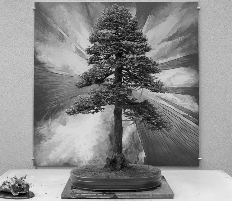 redwood_bonsai_natives