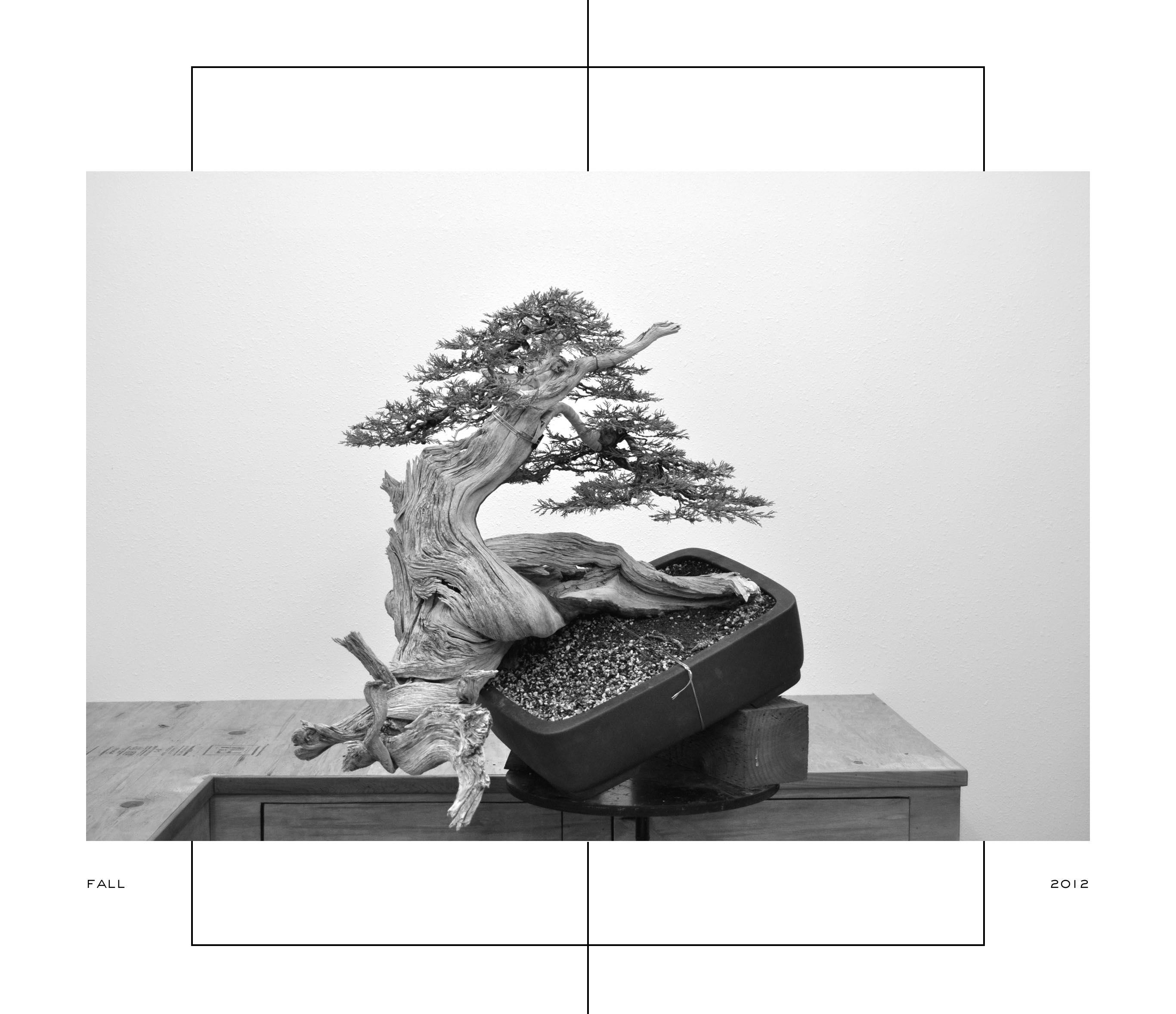 Ryan_Neil_Bonsai_Bonsai Mirai_Rocky Mountain Juniper_Style_Styling_Repot_Workshop_Pacific North West