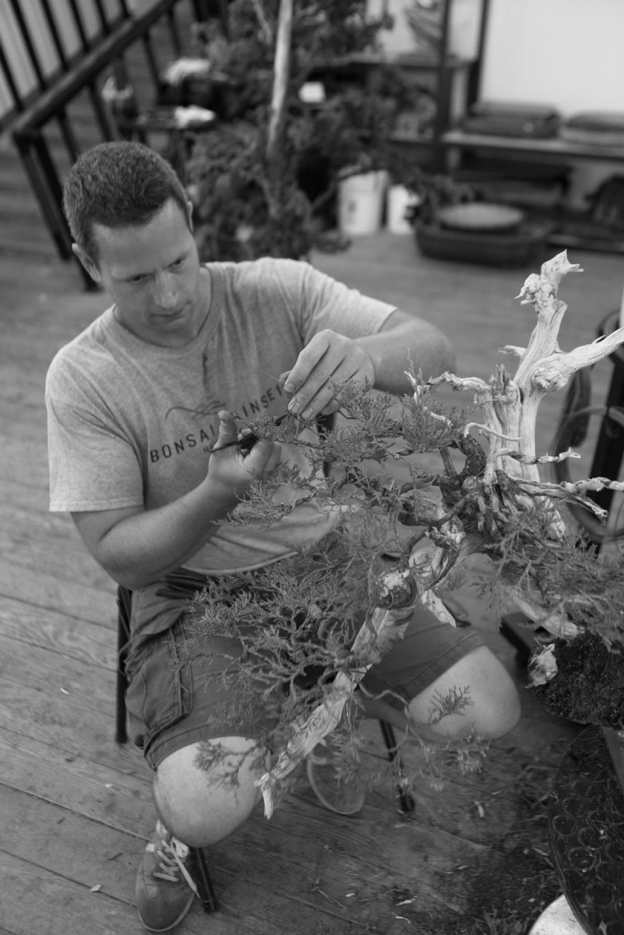 ryan_neil_wiring_bonsai_mirai