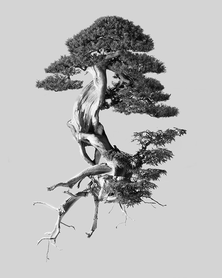 chris_hornbecker_bonsai_diptych