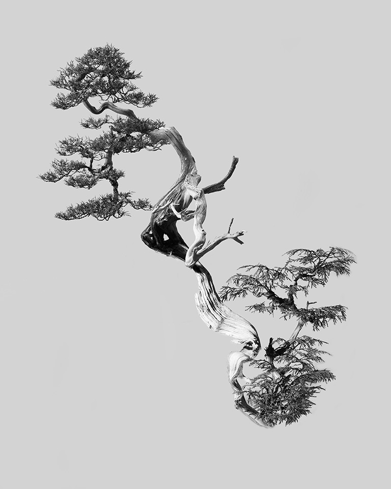 chris_hornbecker_bonsai_diptych_2