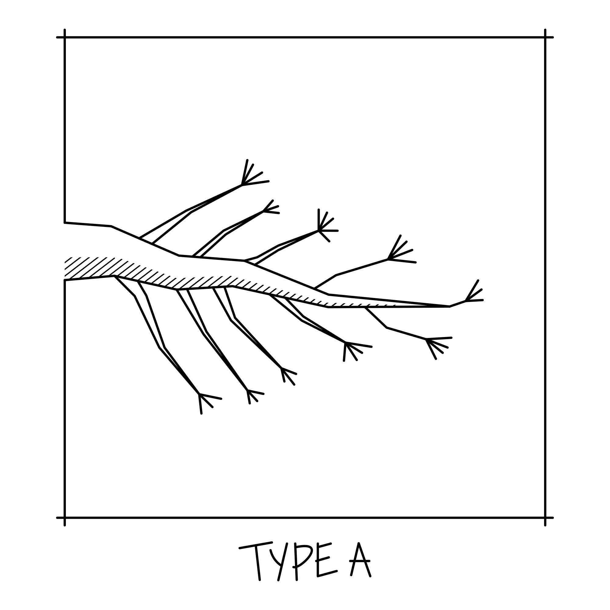 bonsai_Branch_structure