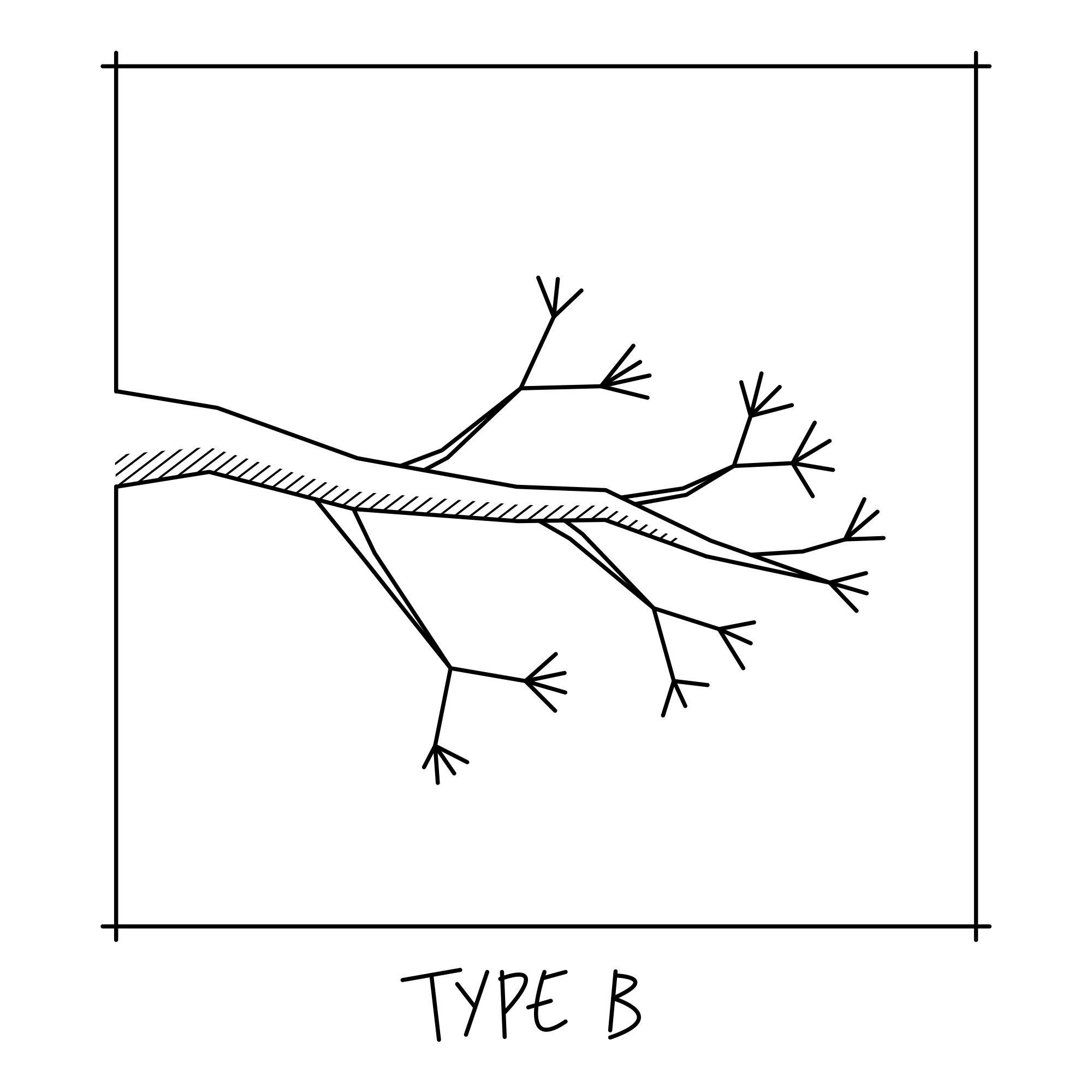 bonsai_branch_structure