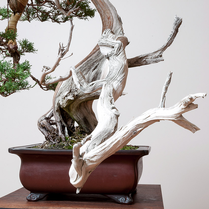 rmj_bonsai_analogous