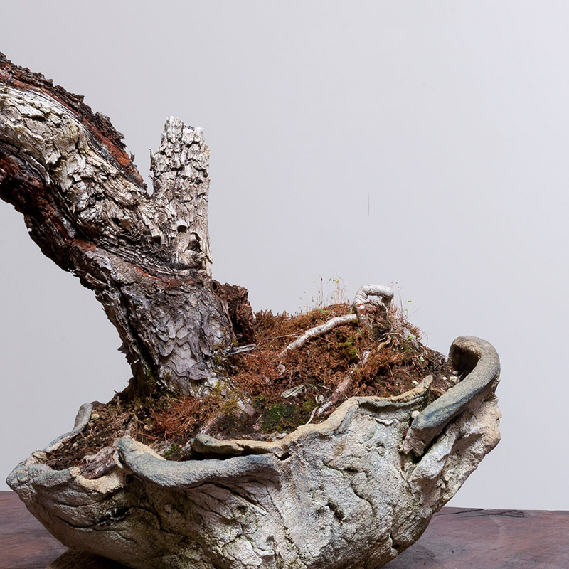 pine_bonsai_freeform_ceramic