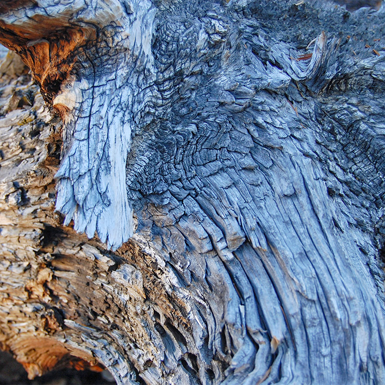 bristlecone_pine_deadwood_detail