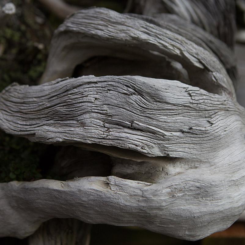 bonsai_deadwood_Detail_mirai