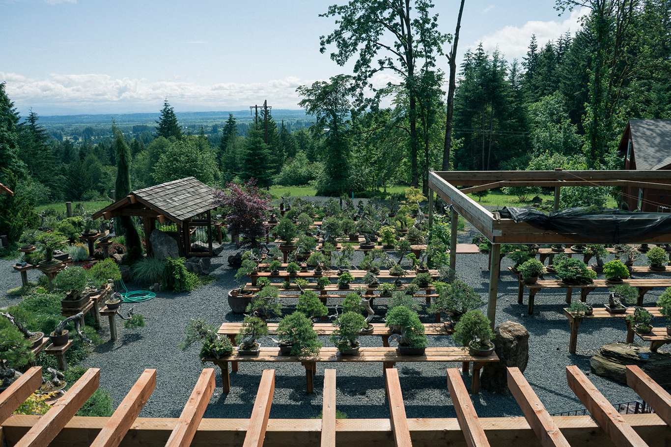 Garden Visits Bonsai Mirai