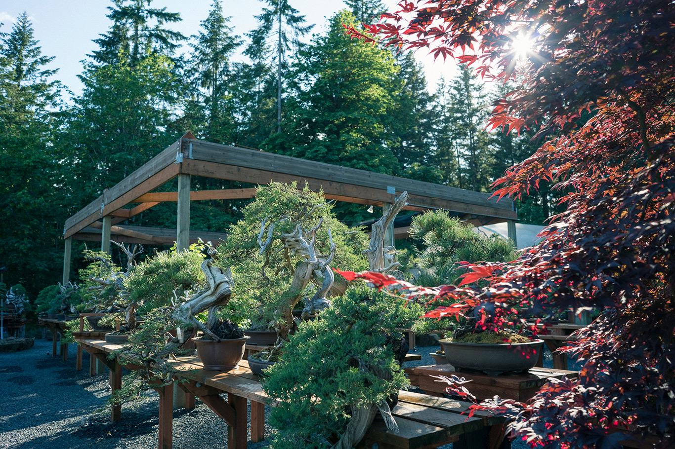 bonsai_mirai_garden_2