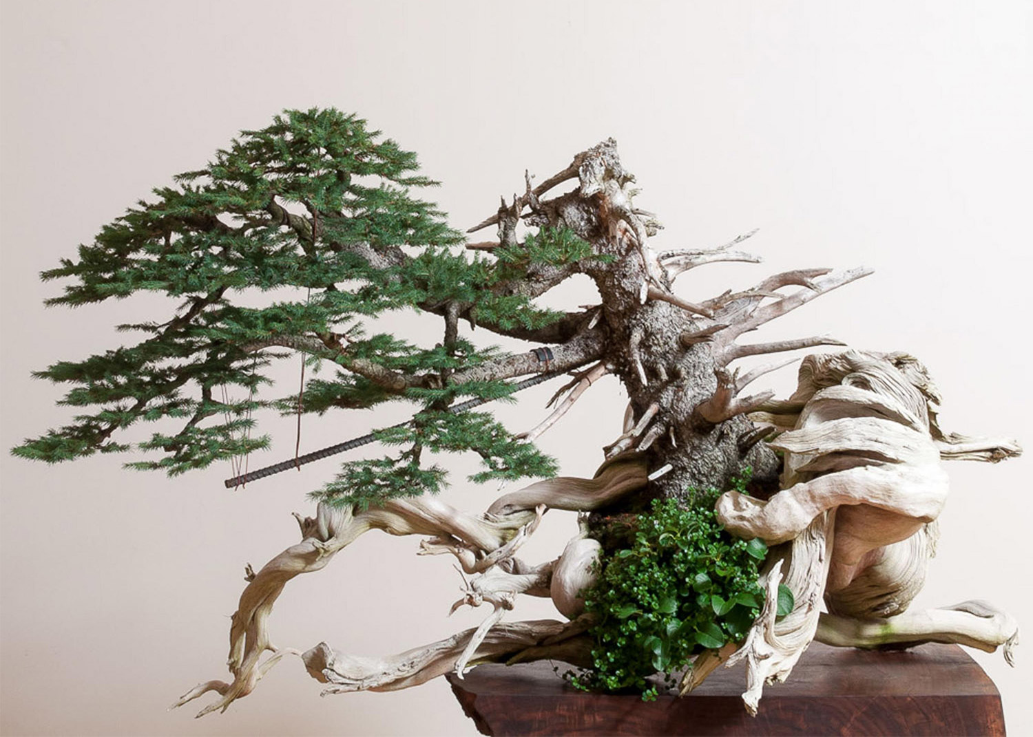 spruce_on_deadwood_bonsai_ryan_neil