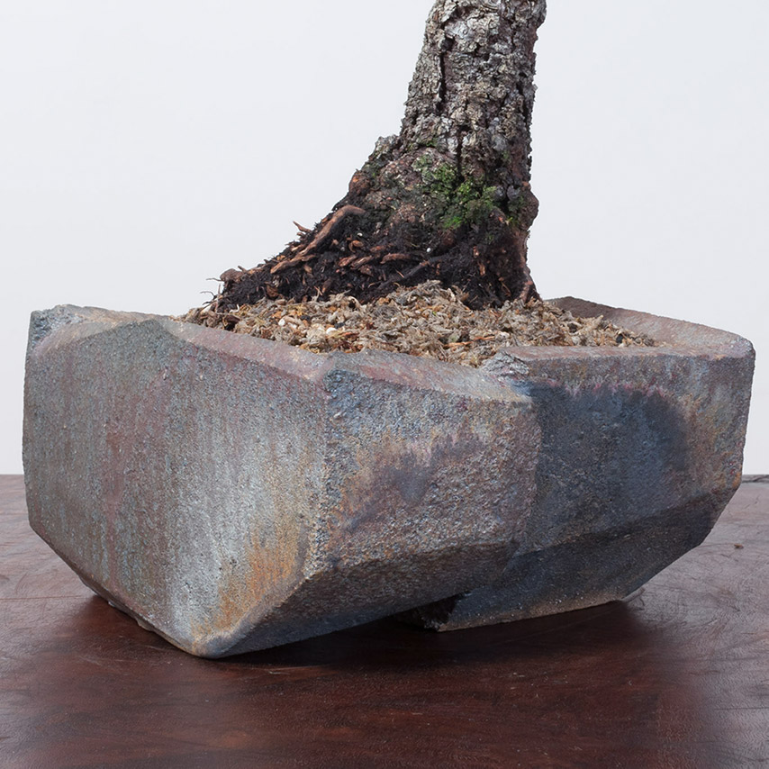 Jonathan_Cross_bonsai_Ceramic_mirai