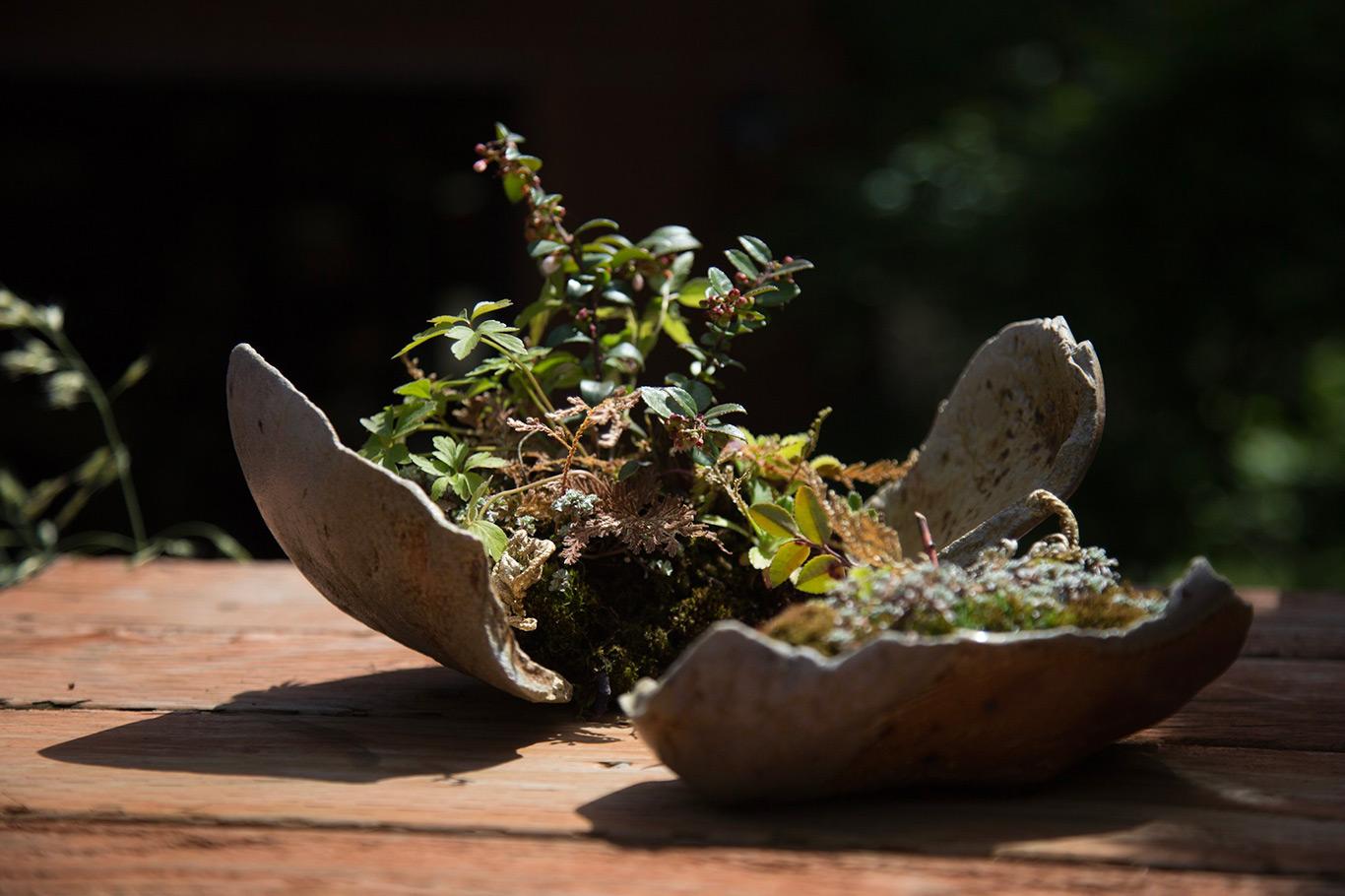 kusmono_bonsai_mirai