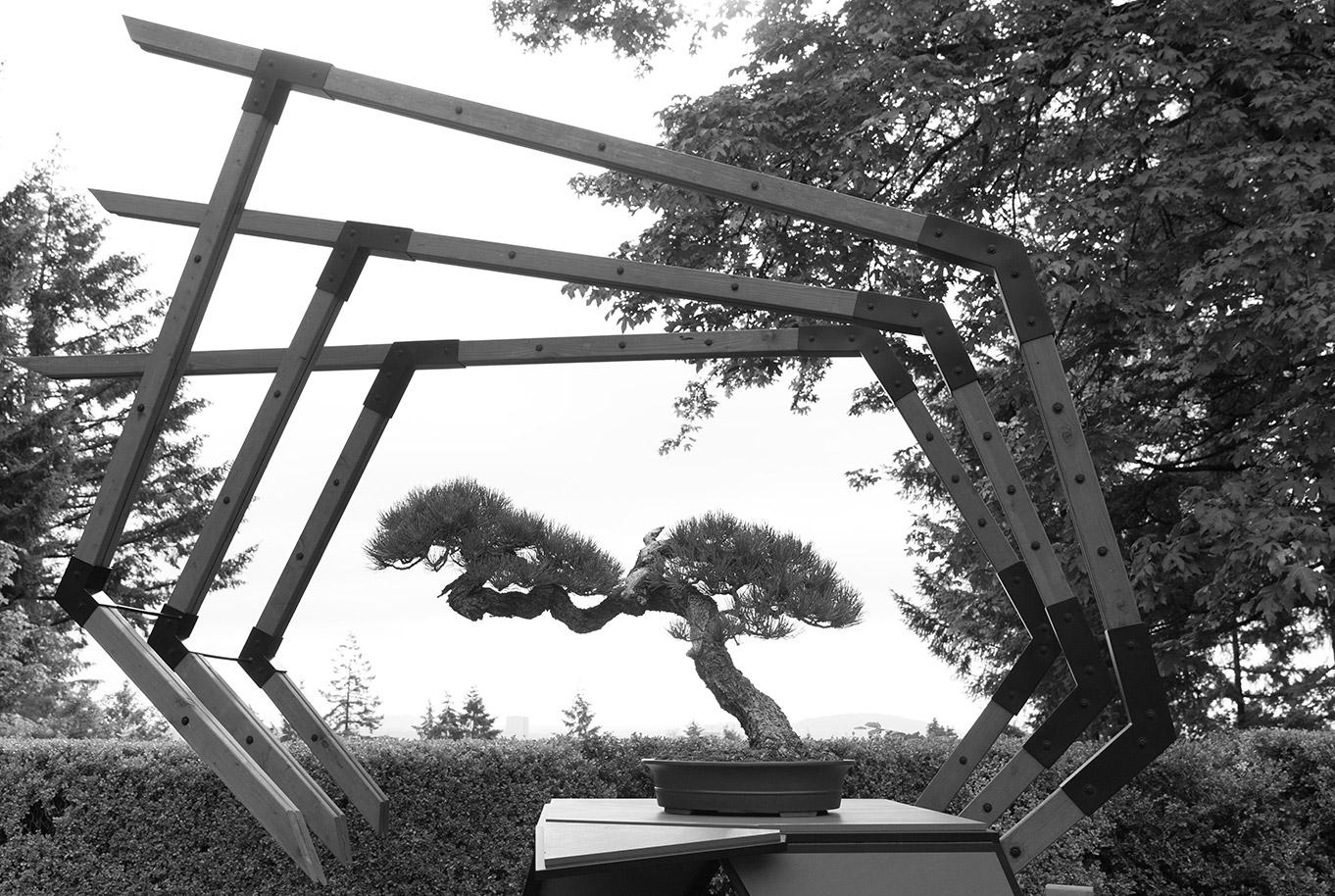 Japanese_gardens_ryan_neil_bonsai_ponderosa