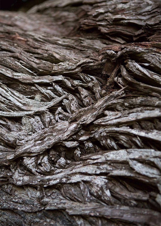monterey_cypress_bark_bonsai_mirai