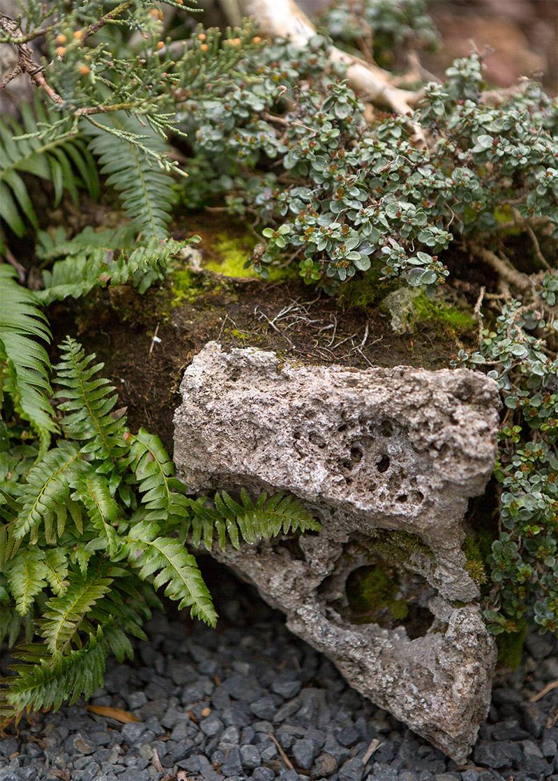 sierra_juniper_detail