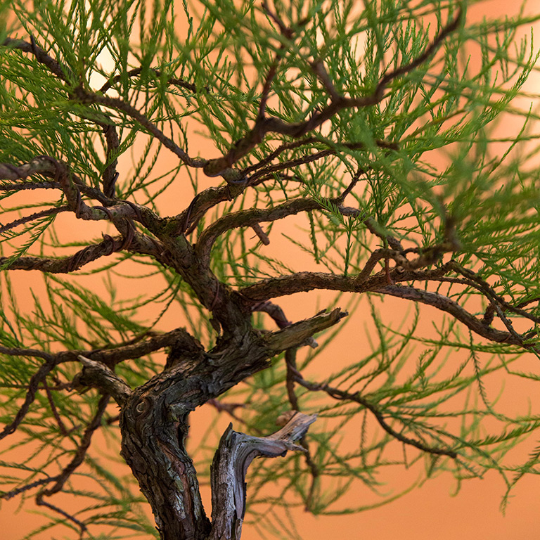 bald_cypress_detail_mirai_spectrum