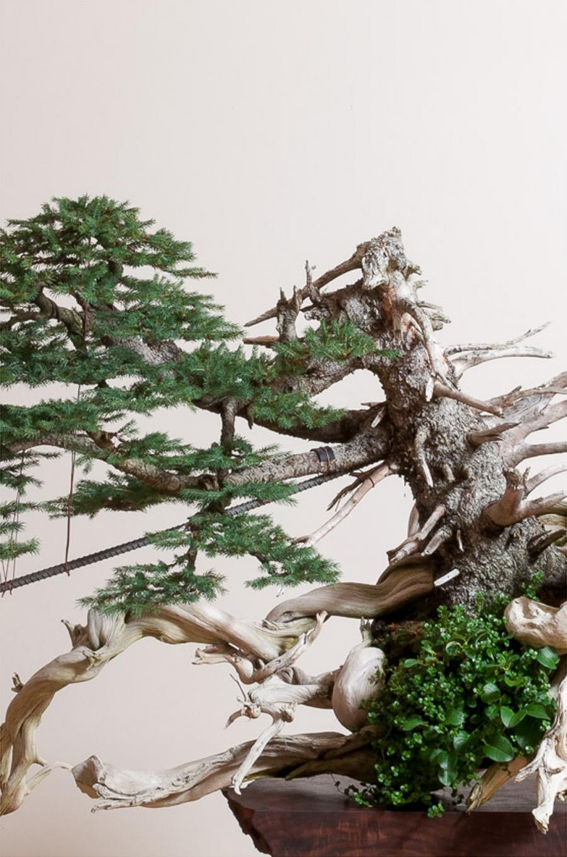 https://bonsaimirai.com/node/617