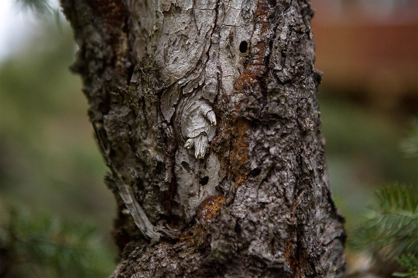 bonsai_trunk_detail