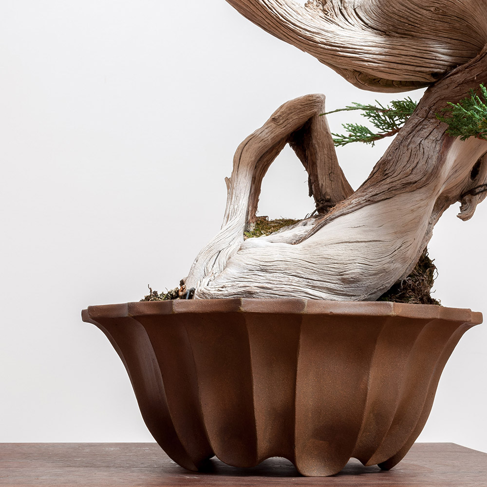 Wood Fired Geometry Bonsai Mirai