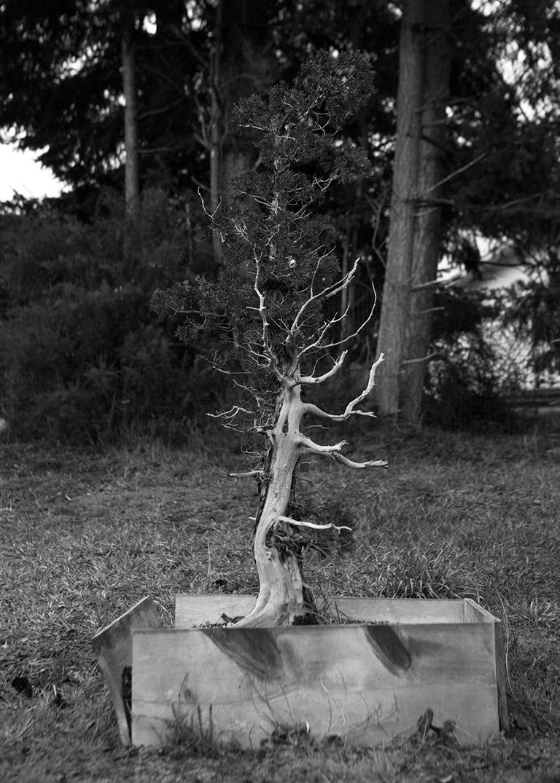 yamadori_bonsai