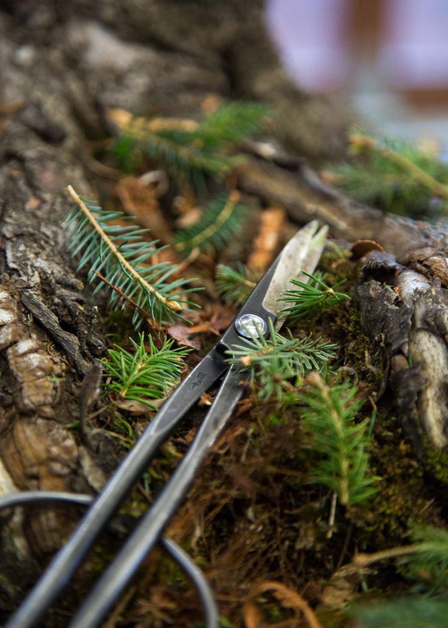 bonsai_pruning