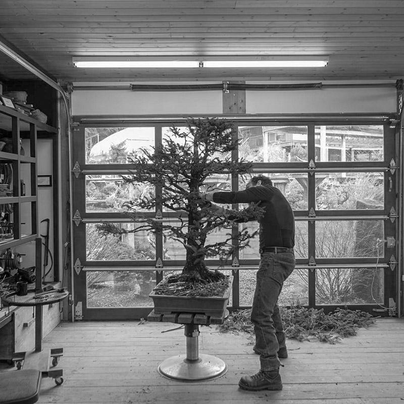 pruning_bonsai-mirai
